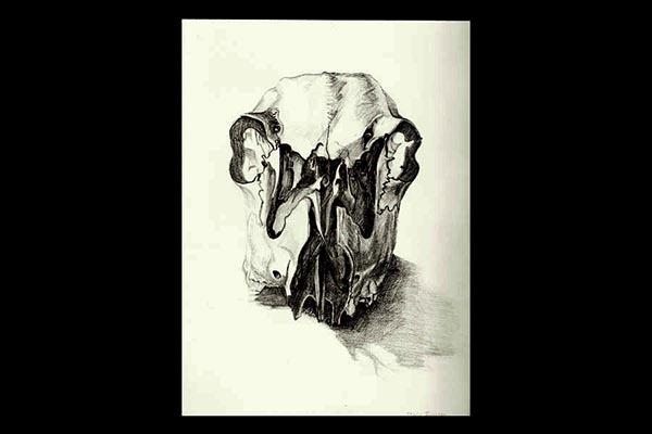 """Deer Skull, 2010, graphite, 12x9"""""""